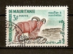 Sellos del Mundo : Africa : Mauritania : Muflon manchado.