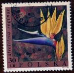 Stamps Poland -  STRELITZIA REGINAE