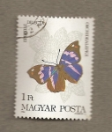Stamps Hungary -  Mariposa Epiphylle dillecta