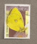 Sellos de Africa - Somalia -  Mariposa Collias crocea