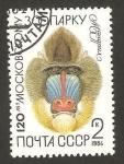Stamps : Europe : Russia :  fauna, mockobckomy