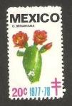 Stamps Mexico -  flora, o. bergeriana