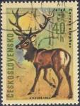 Sellos de Europa - Checoslovaquia -  Jelen Cervus elaphus