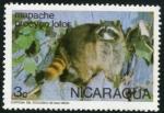 Sellos de America - Nicaragua -  Mapache