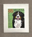 Sellos de Europa - Suiza -  100 años Club de perros de montaña