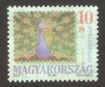 Stamps Hungary -  pavo real