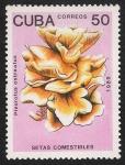 Sellos del Mundo : America : Cuba :  SETAS-HONGOS: 1.134.016,00-Pleurotus osteatus (amarillo)