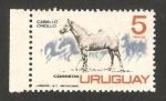 Stamps Uruguay -  Caballo criollo