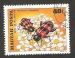 Sellos de Europa - Hungría -  flores e insectos, achillea millefolium, trichodes apiarius