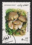 Stamps Asia - Afghanistan -  SETAS-HONGOS: 1.100.054,01-Tricholoma saponaceum -Mch.1954
