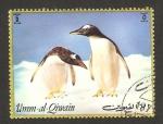 Stamps United Arab Emirates -  umm al qiwain, pingüinos