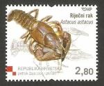 Sellos de Europa - Croacia -  astacus astacus, cangrejo
