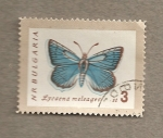 Sellos de Europa - Bulgaria -  Mariposa, Lycaena meleager