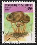 Sellos de Africa - Benin -  SETAS-HONGOS: 1.114.031,00-Tephrocybe carbonaria