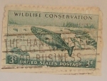 Stamps : America : United_States :  King Salmon