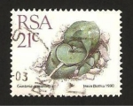Stamps South Africa -  flora, gasteria armstrongii