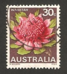 Stamps : Oceania : Australia :  flor waratah