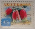 Sellos de Oceania - Australia -  Correa reflexa