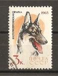 Sellos de Europa - Rusia -  Perros.