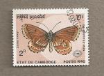 Stamps Cambodia -  Mariposa Zizina oxleyi