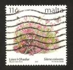Sellos de Europa - Malta -  flores, silene colorata