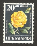 Stamps : Europe : Bulgaria :  rosa radiman