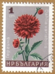 Stamps : Europe : Bulgaria :  Flores
