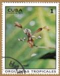 Sellos del Mundo : America : Cuba : Orquideas tropicales
