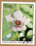 Sellos de America - Cuba -  Orquideas tropicales