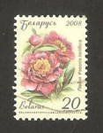 Stamps : Europe : Belarus :  flor de jardín, paeonia lactiflora