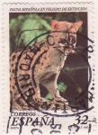 Sellos de Europa - España -  Fauna en Peligro de Extinción: Gineta