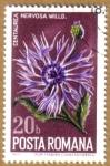 Stamps Europe - Romania -  Flores