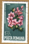Stamps Europe - Romania -  Flores