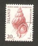 Sellos de Europa - Islandia -  caracola, buccinum undatum