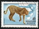 Stamps Hungary -  Guepardo