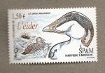 Stamps America - San Pierre & Miquelon -  Ave l'eider, grandes migraciones