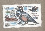 Sellos del Mundo : America : San_Pierre_&_Miquelon : Arlequin buceador, grandes migraciones