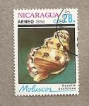 Sellos de America - Nicaragua -  Molusco  marino