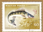 Stamps Hungary -  Peces, LUCIOPERCA