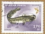 Stamps Hungary -  Peces, SILURUS