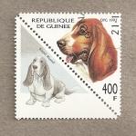Sellos de Africa - Guinea -  Perro Basset