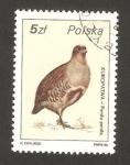 Sellos de Europa - Polonia -  ave, perdiz