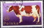 Sellos de Europa - Polonia -  Vaca