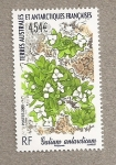 Stamps Europe - French Southern and Antarctic Lands -  Galium antarcticum