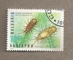 Stamps Bulgaria -  Insectos acuáticos