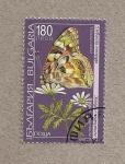 Sellos de Europa - Bulgaria -  Mariposa Vanessa cardui
