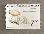 Stamps Europe - Greenland -  Seta Amanita groenlandica