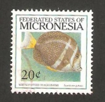 Stamps Oceania - Micronesia -  pez, acanthurus guttatus