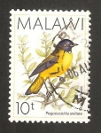 Stamps : Africa : Malawi :  ave, pogonocichla stellata