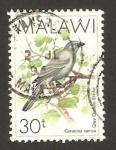 Sellos del Mundo : Africa : Malawi : ave, coracina caesia